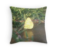 Pyrisitia Lisa with reflection Throw Pillow