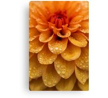 Dahlia Orange Flame Petals Canvas Print