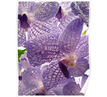 Orchid droplets Poster