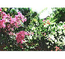 Bunches of Color (Brush Strokes) Photographic Print