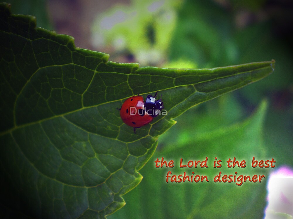 Ladybird by Dulcina
