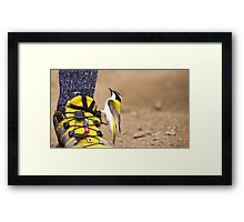 Where can I buy a pair of these? Framed Print