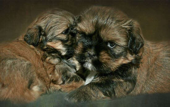 Strudel & Schnitzel.....4 weeks and 1 day old by Susanne Correa