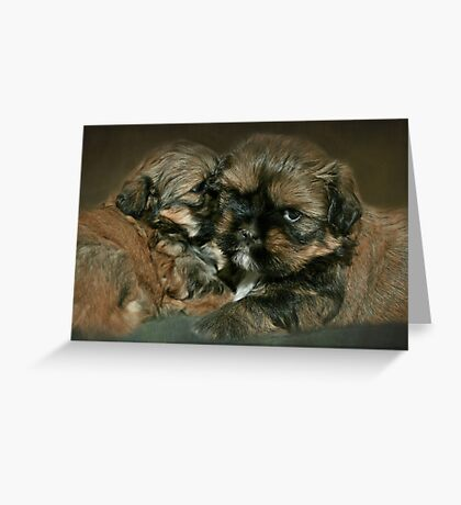 Strudel & Schnitzel.....4 weeks and 1 day old Greeting Card