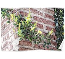 Yellow Wall Climber (pencil) Poster