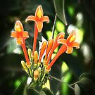 Tropical Orange Flowers by James Zickmantel