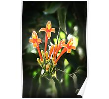 Tropical Orange Flowers Poster