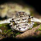 Leaftail Gecko by Johan Larson