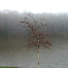 Daylesford Lake on a misty day by charlienelson