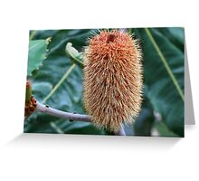 Banksia robur Greeting Card