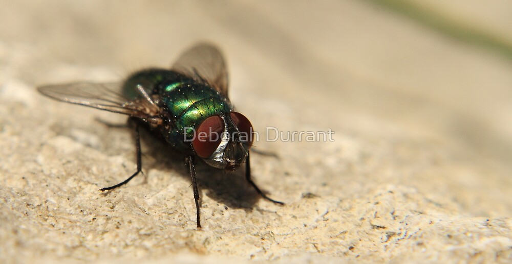 The mighty fly by Deborah Durrant