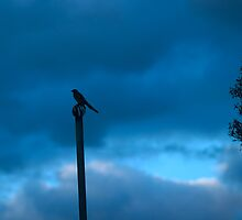 bird not on a wire by ashara