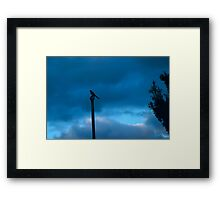 bird not on a wire Framed Print