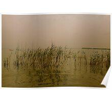 Misty Sunset Reeds Poster