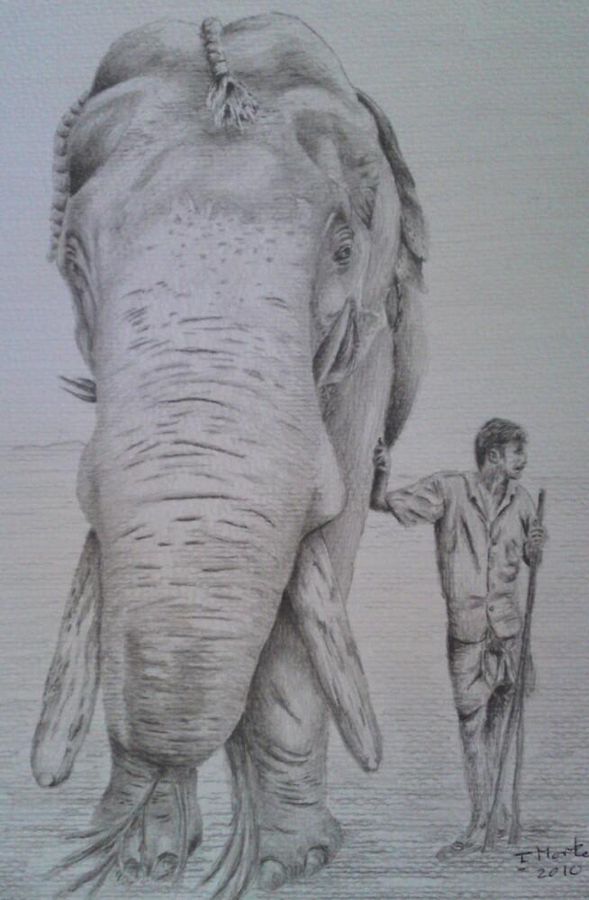 The Elephant Man by Ian Morton