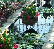 Sunken Garden  by aleen