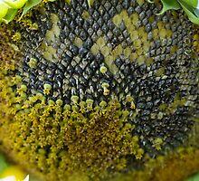 A Sunflower World  by HELUA