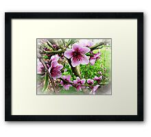 Nectarine Blossom with leaves forming Framed Print