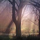 Misty Morning Light - Tollcross Park Glasgow Scotland UK Europe by simpsonvisuals