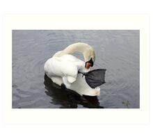 Swaning around (2) - river swan Art Print