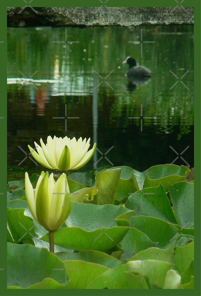 lotus and bird by LisaBeth