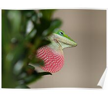 Lizard (green anole) with his redbubble Poster