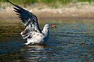 Water landing by Eyal Nahmias