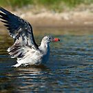 Water landing by Eyal Nahmias