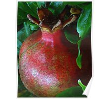 A Pomegranate Grows Poster