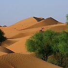 Dunes and Ghaf  by David Clark