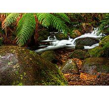 Cement Creek #3 Photographic Print