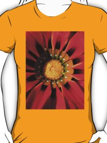 Gazanea Flower from Morgan - photo by Heather Holland  T-Shirt