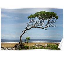 Lone Tree, Jaluit Atoll Poster