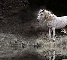 Mustang in the Wind by Kathy Cline