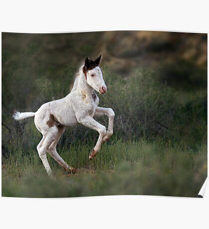Happy Foal Poster