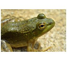 Little Spotted Green Frog Photographic Print