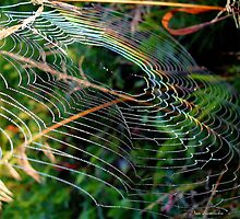 Rainbow Web ! by Jan Siemucha