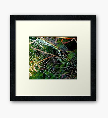 Rainbow Web ! Framed Print