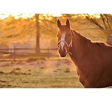 Good Morning Whiskers! Photographic Print