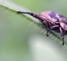 Hang on Beetle Sticker
