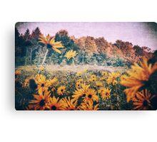 Yellow Flowers At Sunrise Canvas Print