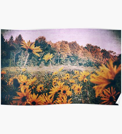 Yellow Flowers At Sunrise Poster