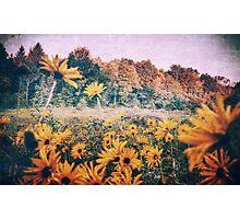 Yellow Flowers At Sunrise Photographic Print