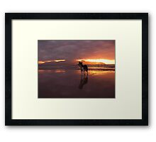 Dog on beach - The Maharees, County Kerry, Eire Framed Print