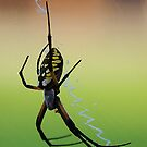 A Noiseless Patient Spider by Alison M