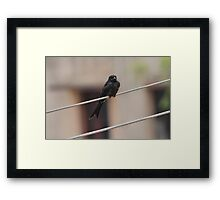Life on Wire Framed Print