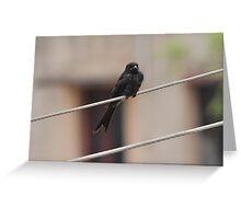 Life on Wire Greeting Card