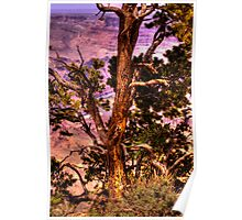 Pine tree over Grand Canyon  Poster