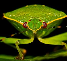 Green Stink Bug by main1