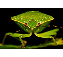 Green Stink Bug Photographic Print